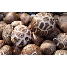 Dong Gu | Shiitake Mushroom | Lentinus Edodes