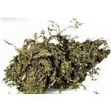 E Bu Shi Cao  (Small Herba Centipedae) – sold by the pound