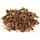 Yu Xing Cao | Fishy Smelling Herb | Houttuyniae