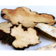 Zhu Ling (Polyporus fungus) - sold by the pound